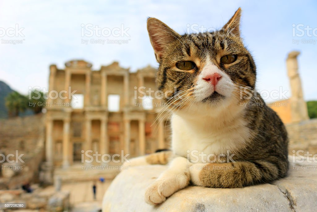 Cat at Ephesus, Turkey stock photo