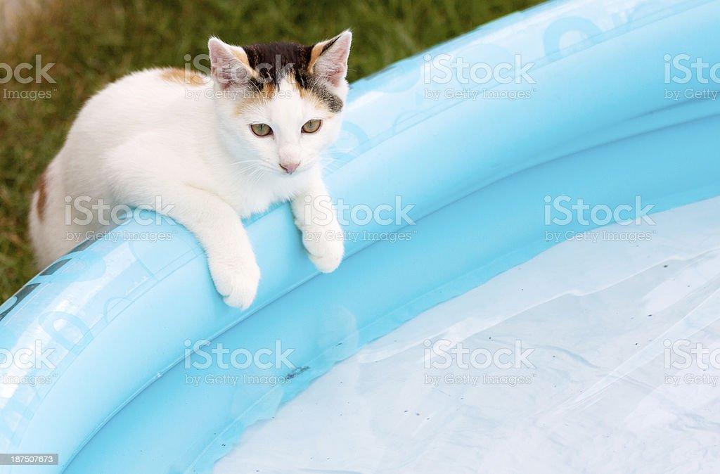 cat at pool stock photo