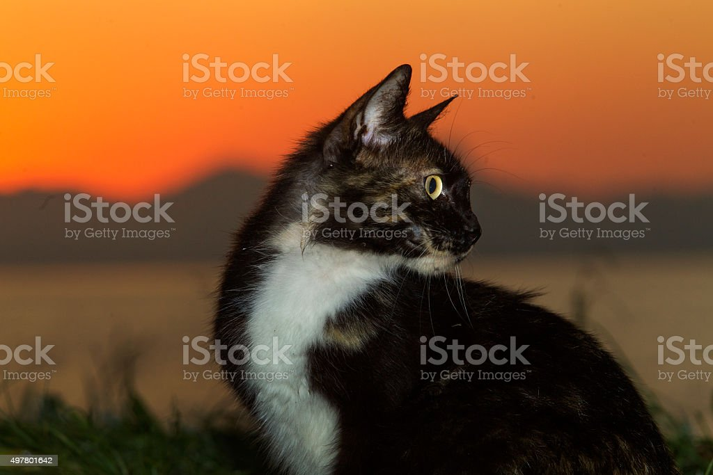 Cat at sunrise in Flamengo beach, Rio de Janeiro, Brazil stock photo