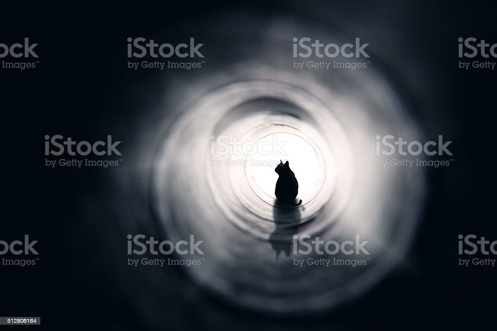 Cat At The End Of A Tunnel stock photo