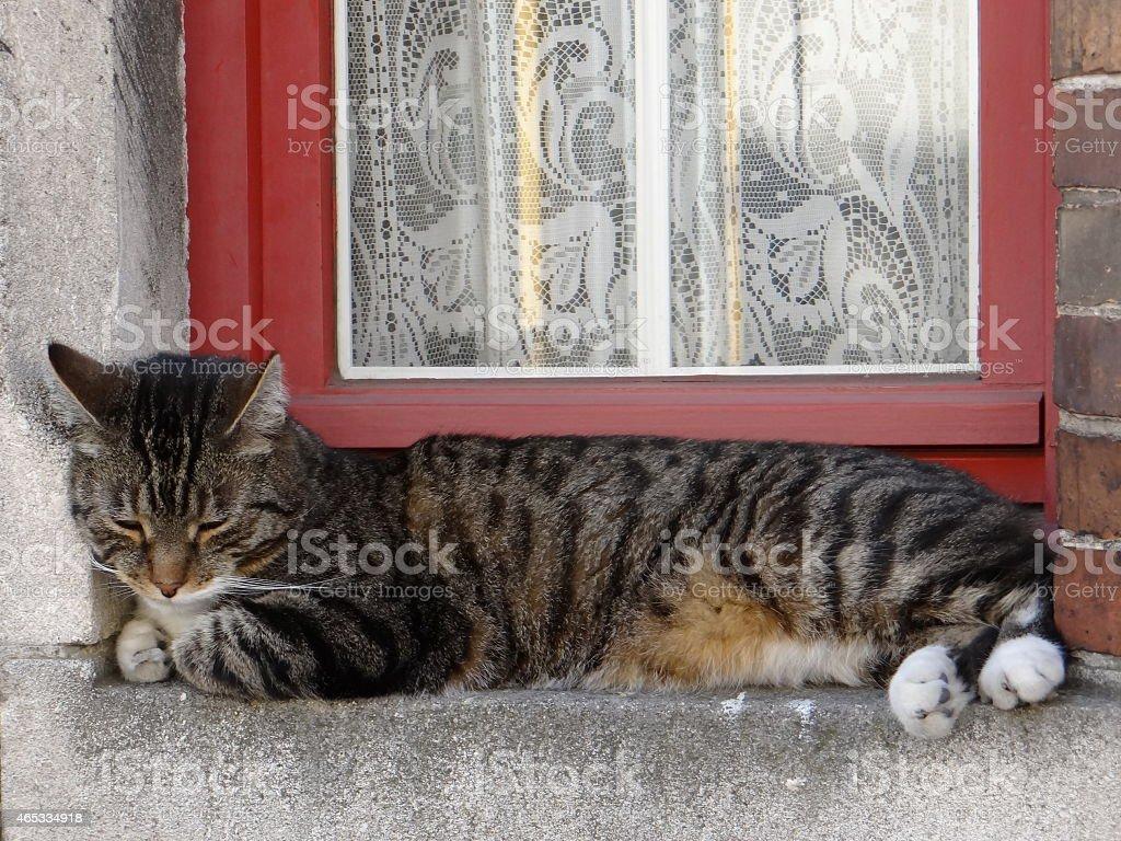 Cat en la ventana foto de stock libre de derechos