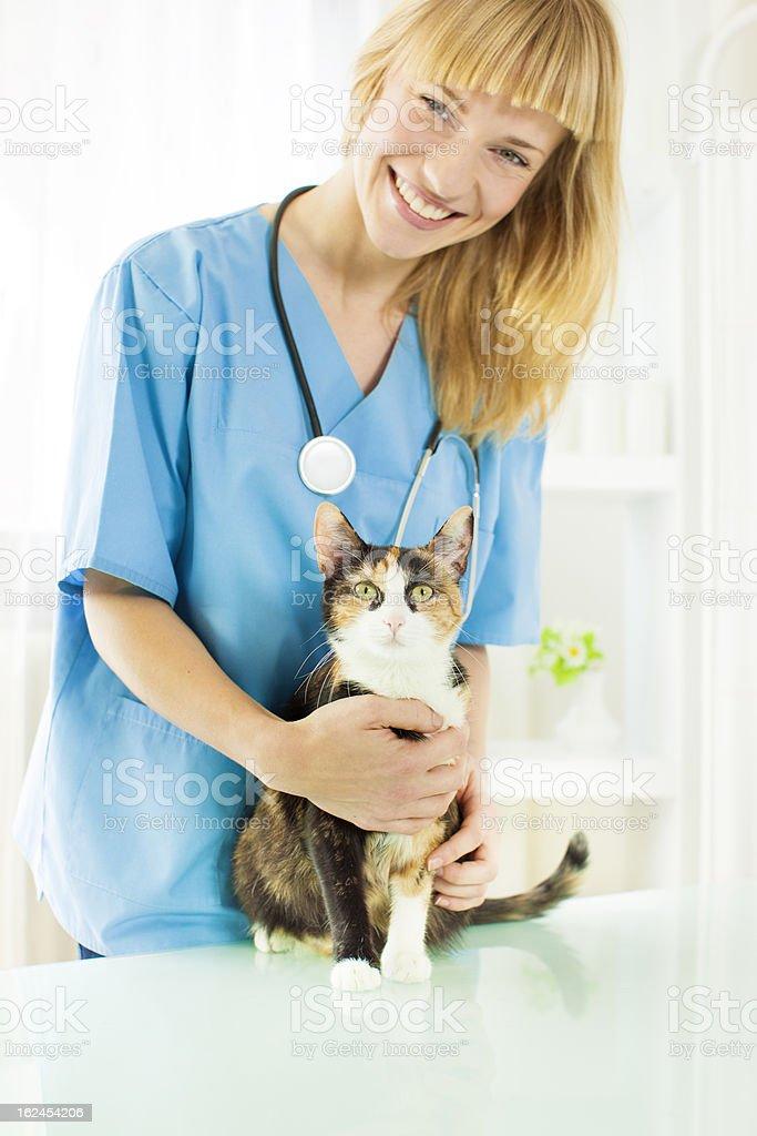 Cat at vet. royalty-free stock photo