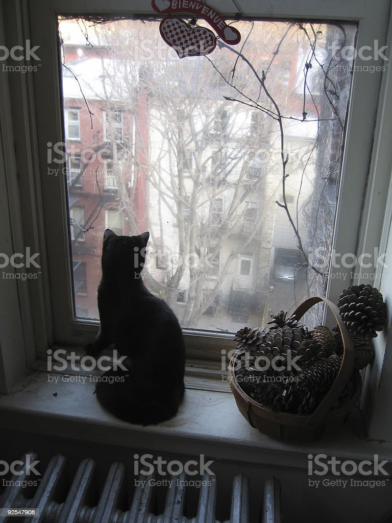 Cat at Window stock photo