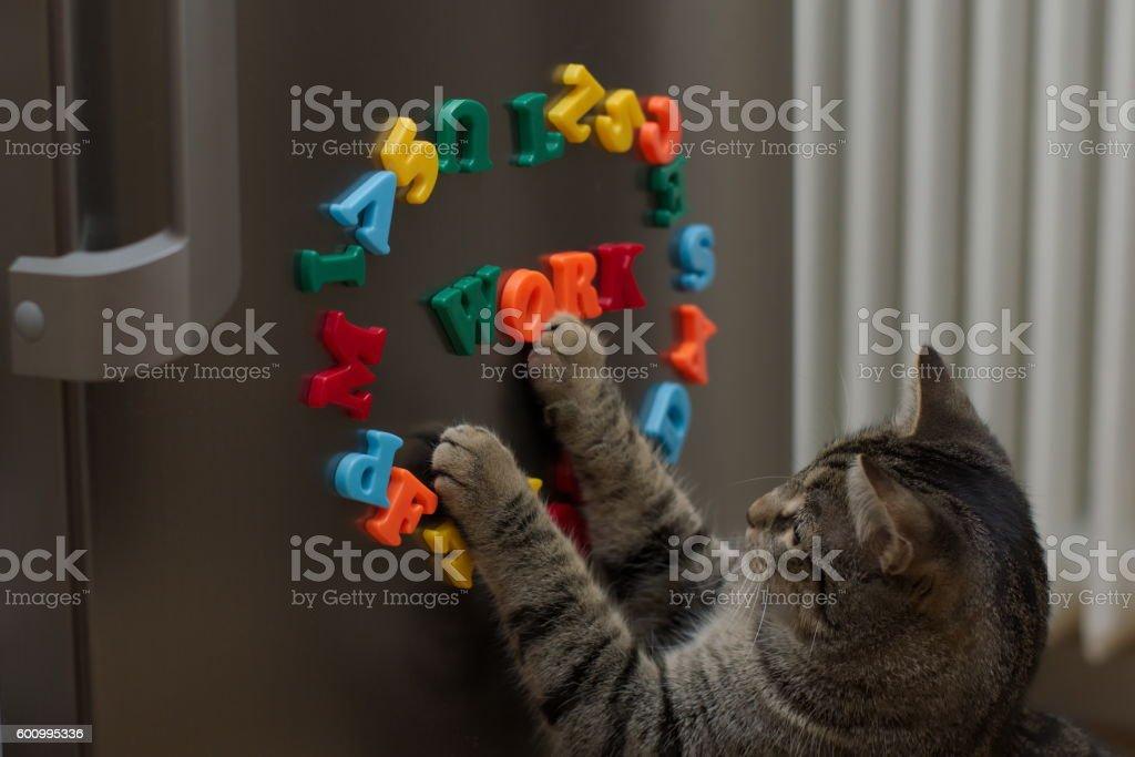 Cat at work stock photo