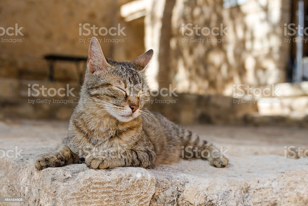 Cat basking in the sun in Greece stock photo