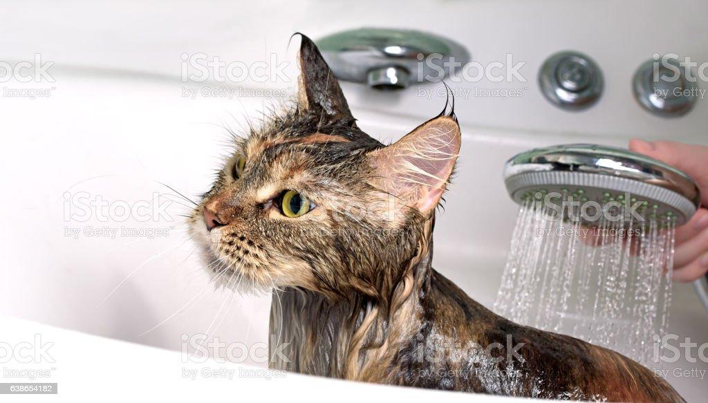 Cat bath stock photo