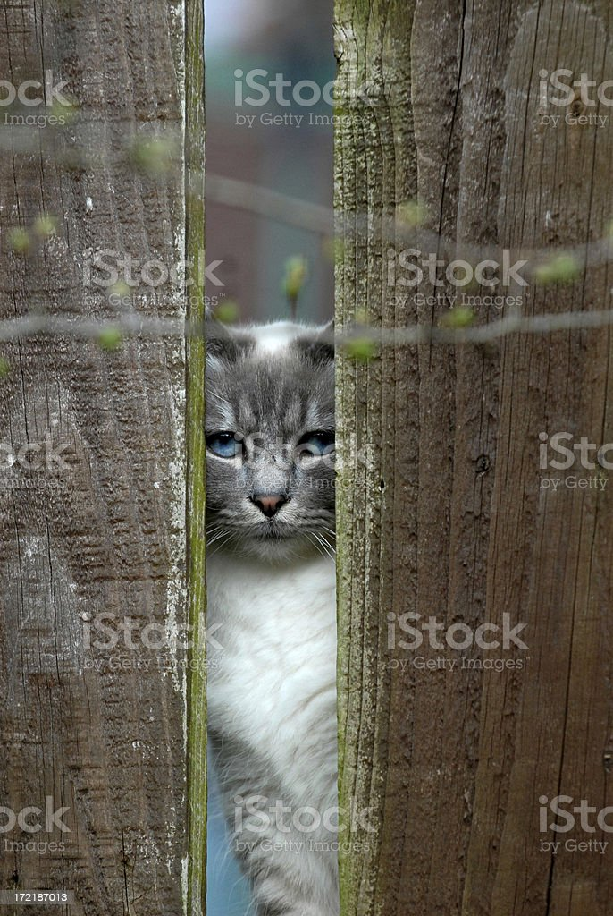 Cat behind a garden fence. royalty-free stock photo