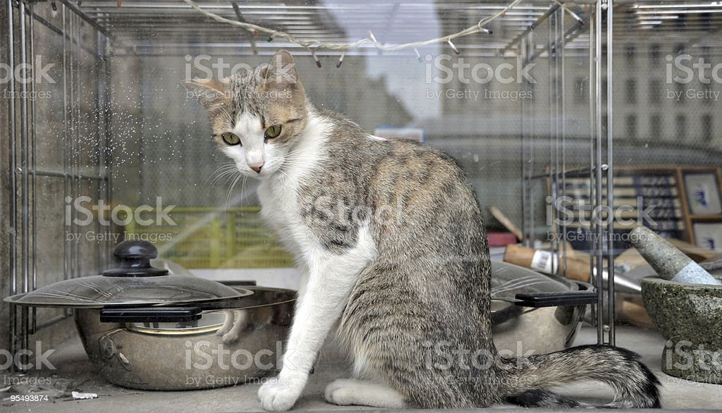 Cat Behind A Window stock photo