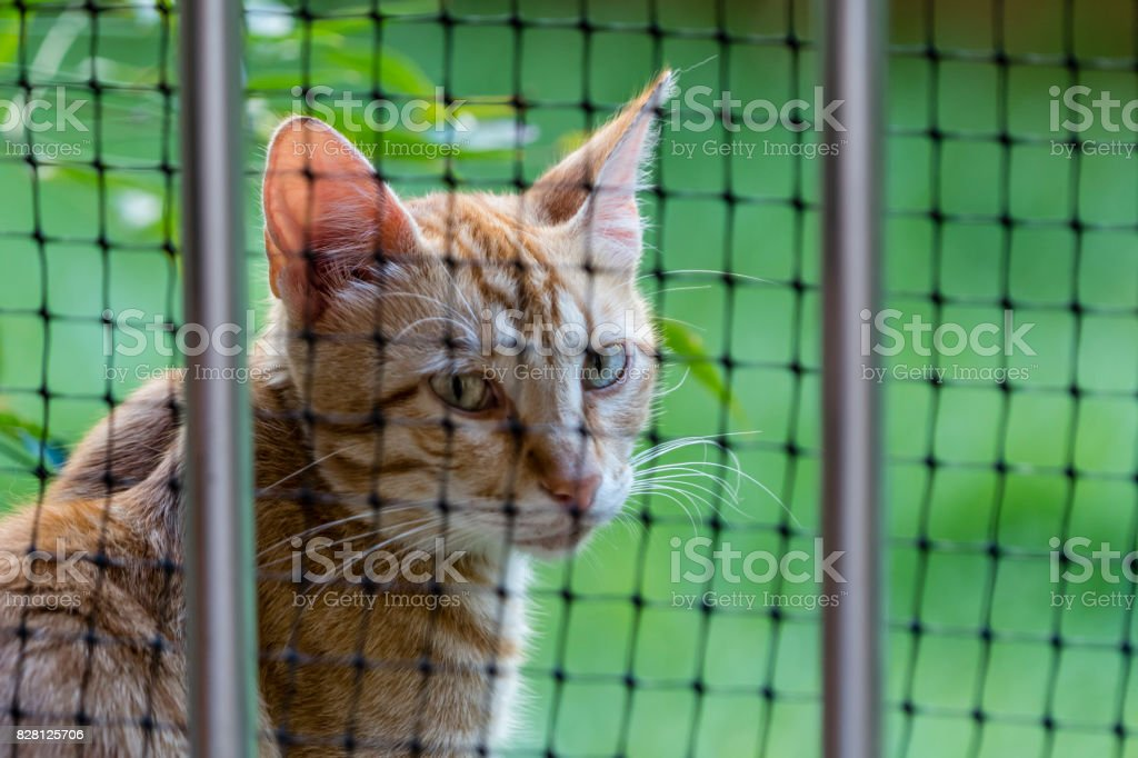 cat behind the fence stock photo