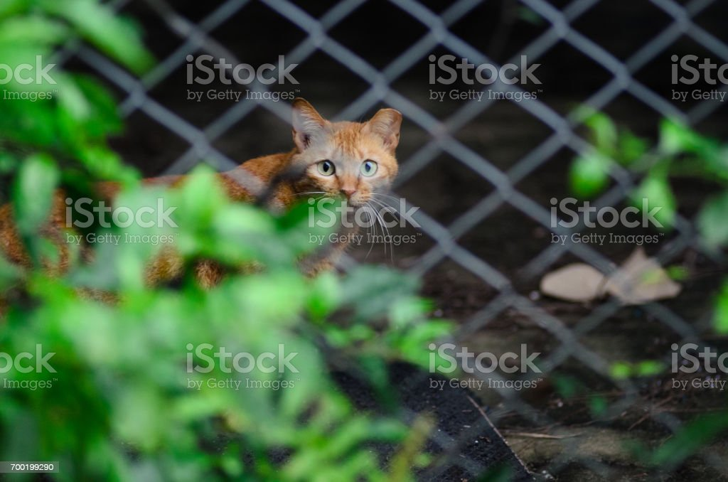 Cat behind the net stock photo