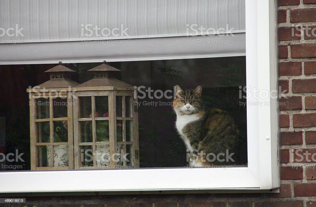 Cat behind window royalty-free stock photo