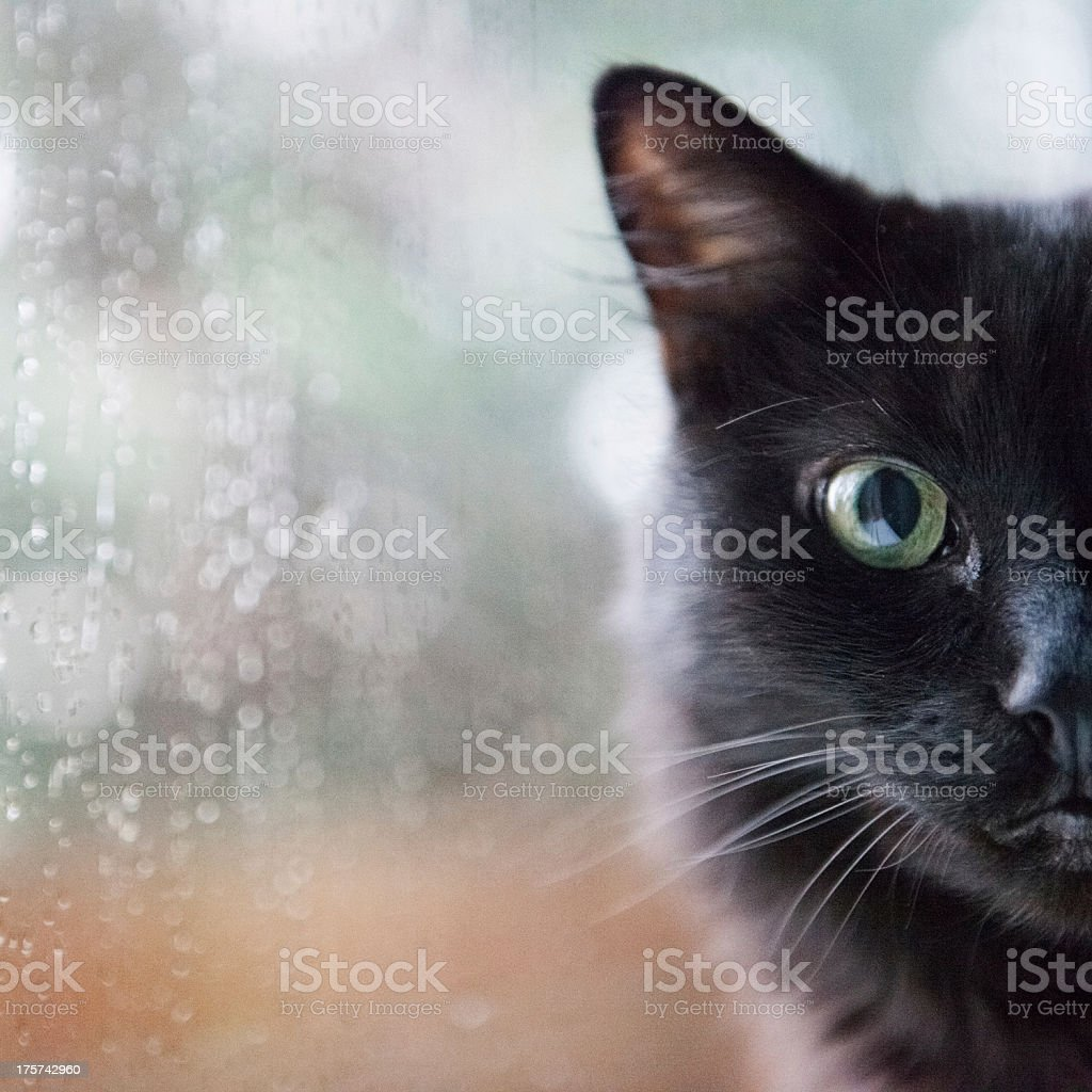 Cat by a window stock photo
