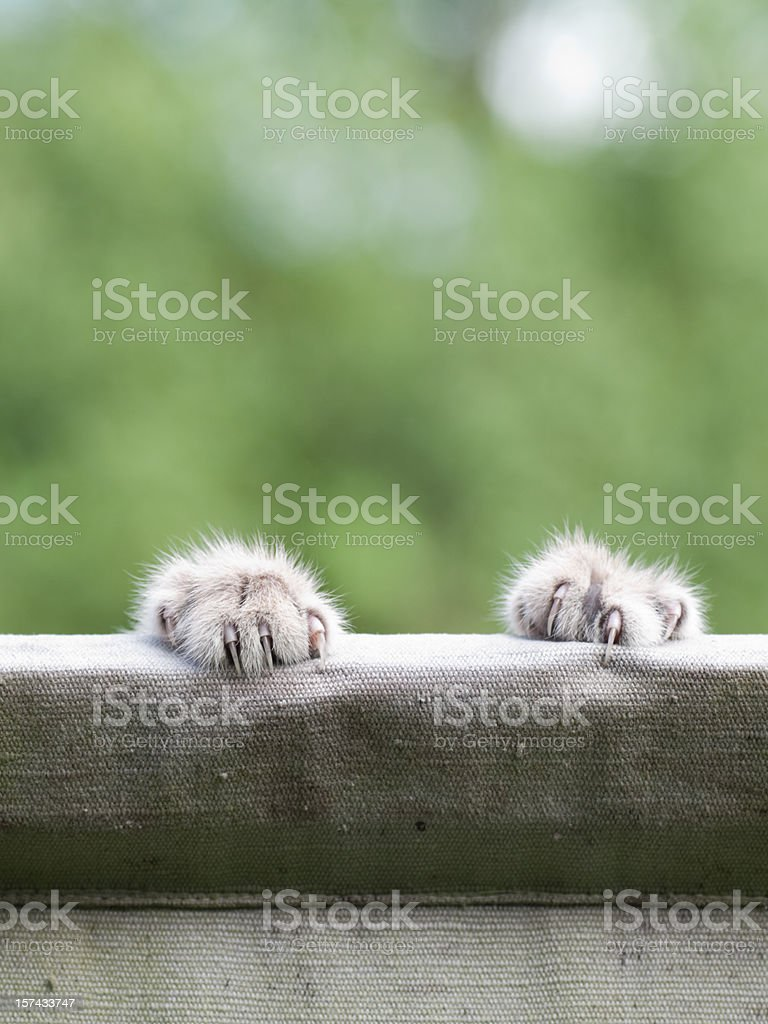 Cat Claws royalty-free stock photo