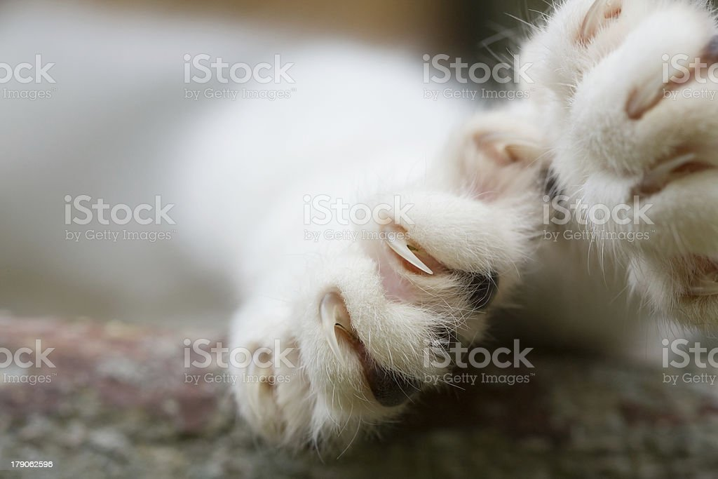 Cat Claws stock photo