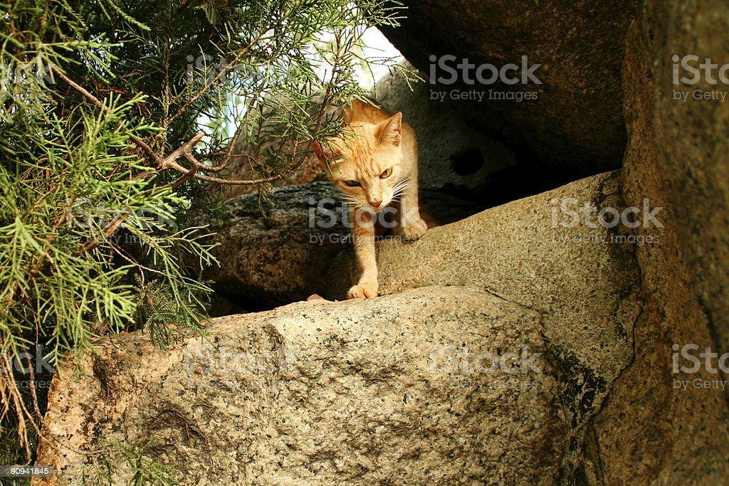 cat subida fuera de rocks foto de stock libre de derechos