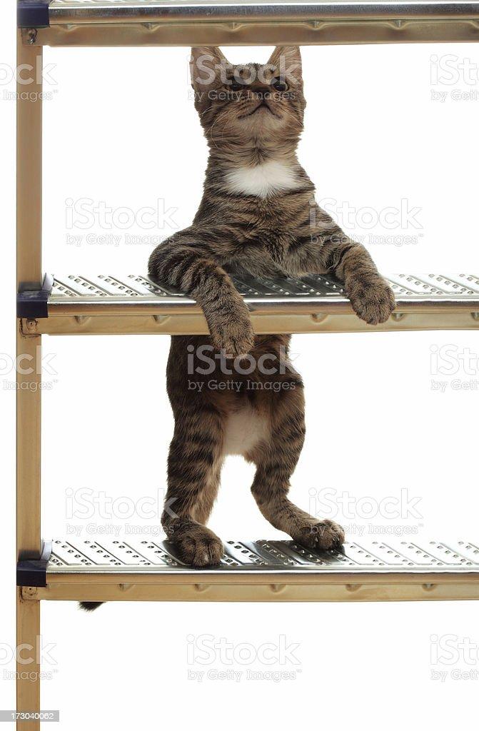 Cat Climbing A Ladder royalty-free stock photo