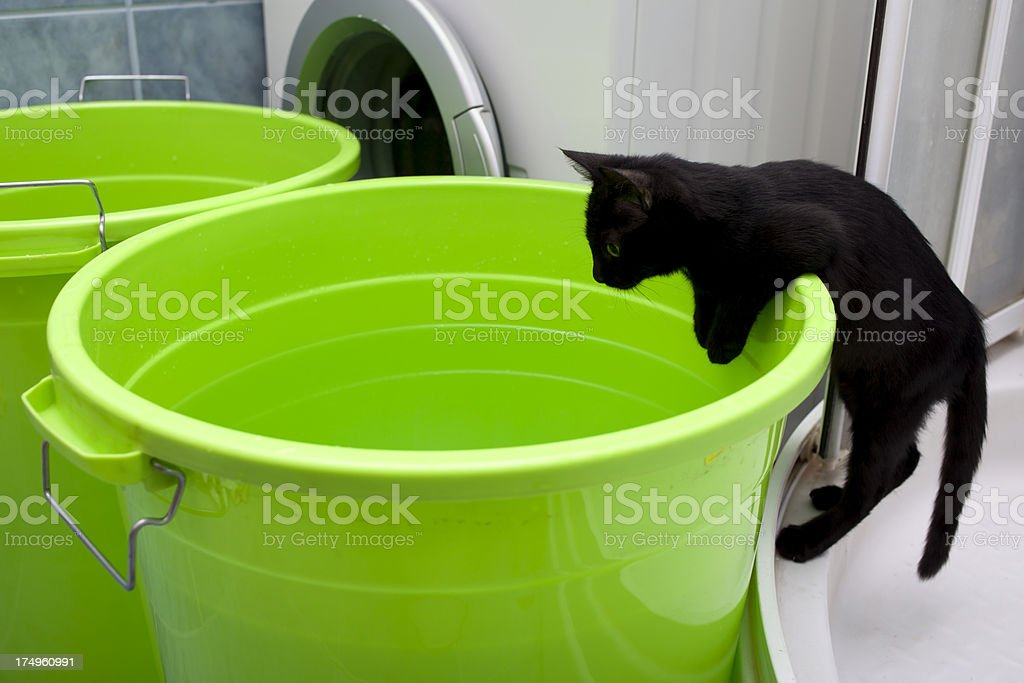 Cat climbing to green pail for water royalty-free stock photo