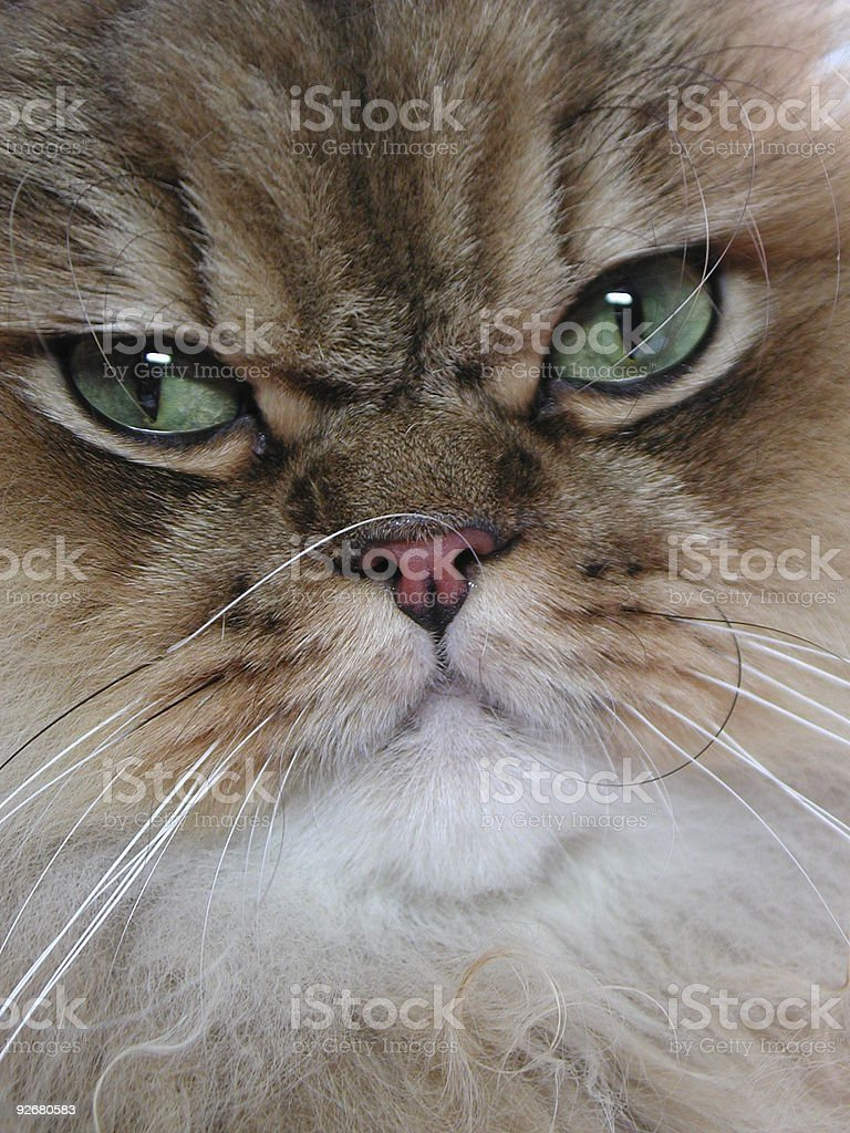 Cat close up stock photo