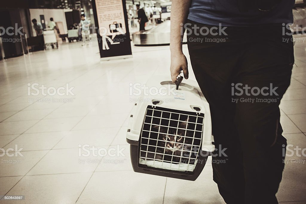 cat closed inside pet carrier in airport stock photo