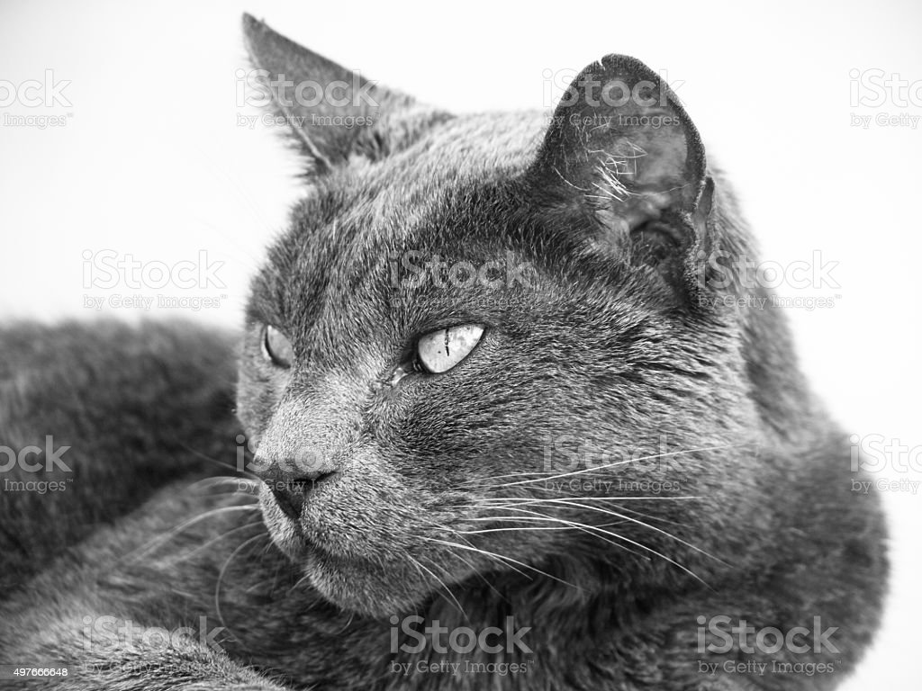 cat close-up stock photo