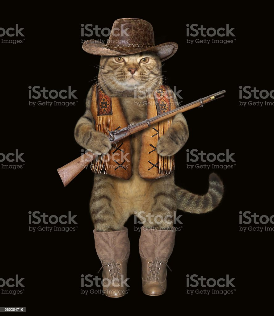 Cat cowbow 2 stock photo