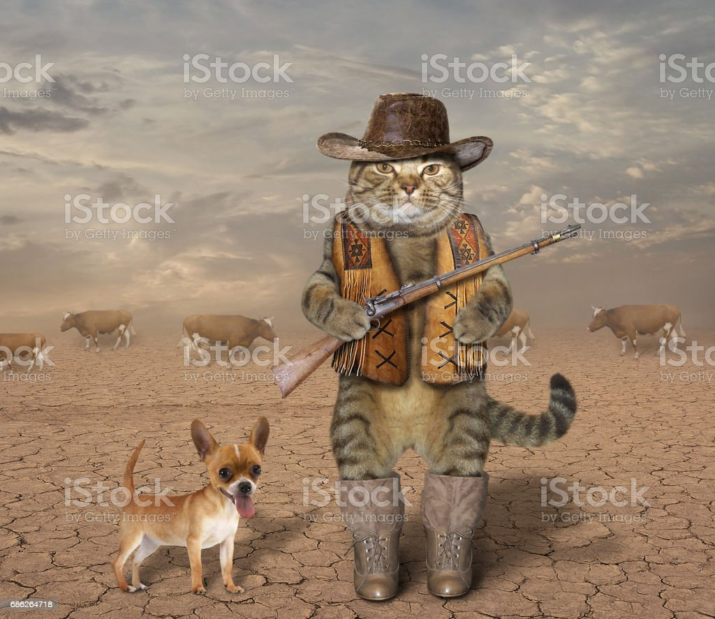 Cat cowboy with his dog 1 stock photo