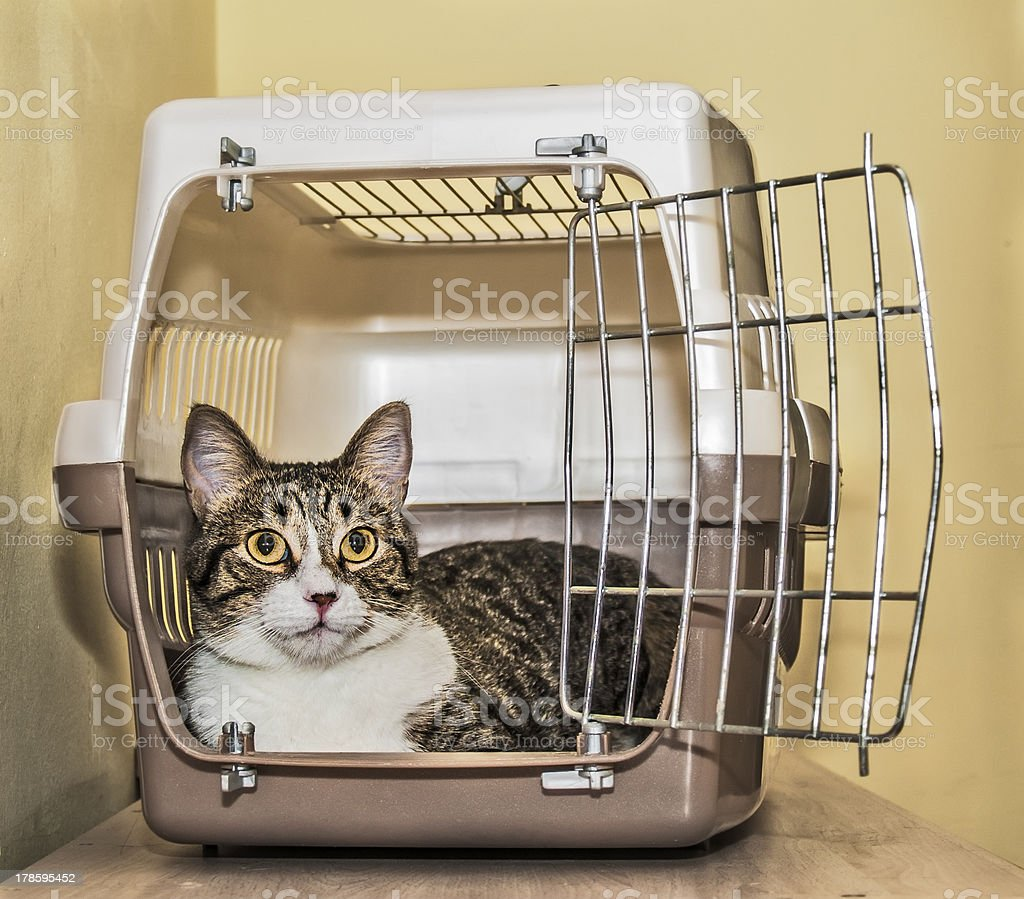Cat crate stock photo