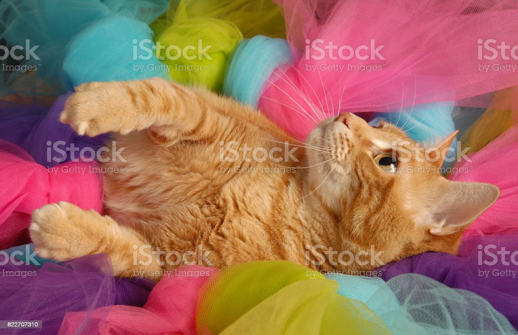 Cat Crazy stock photo