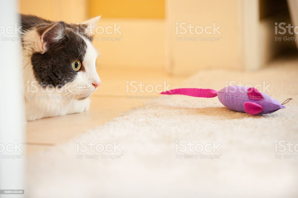 Cat Creeping on Toy Mouse stock photo