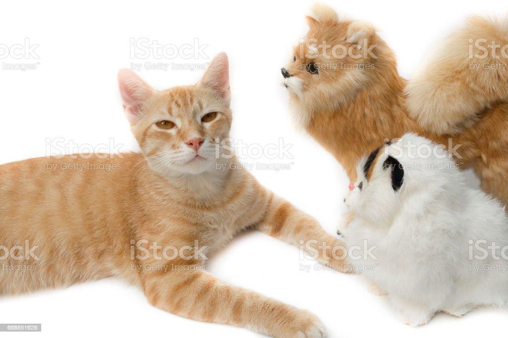 cat cute beautiful on white background stock photo