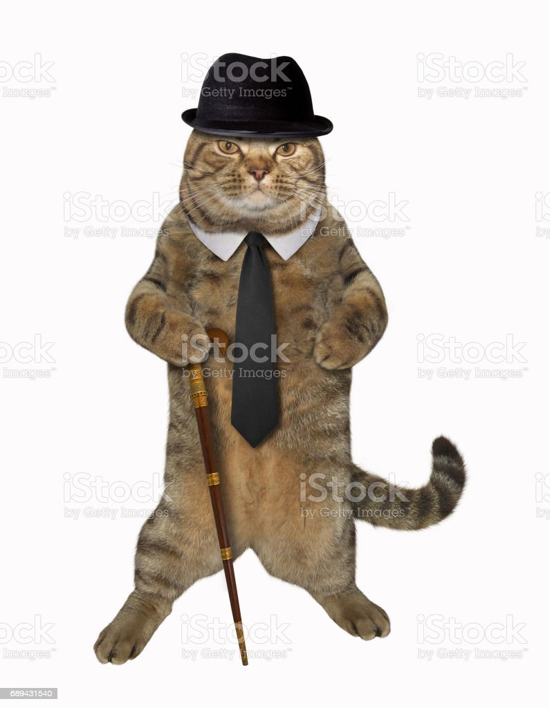 Cat dandy with cane stock photo