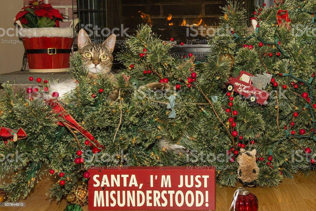 Cat Destroys Christmas stock photo