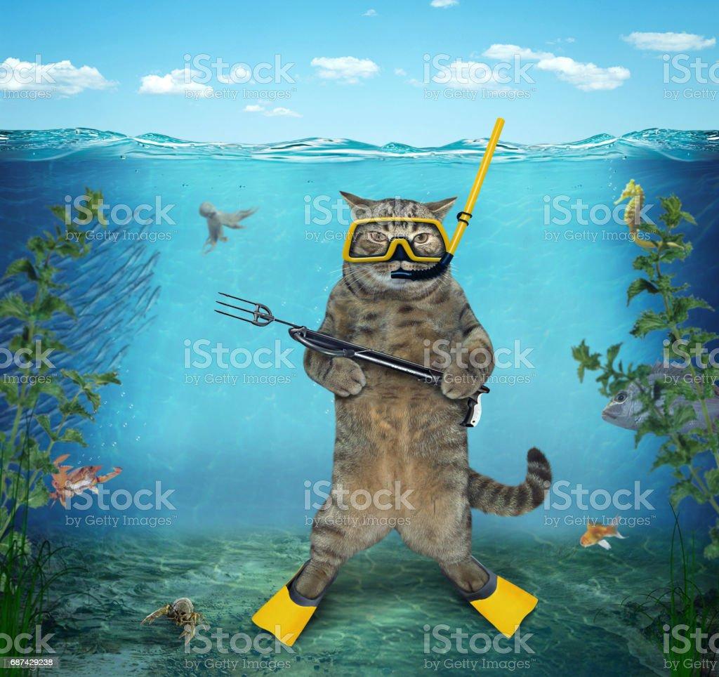 Cat diver 2 stock photo