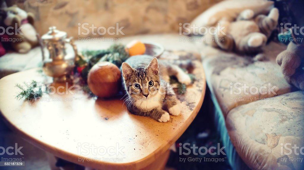 cat doing vandalism at table decoration stock photo