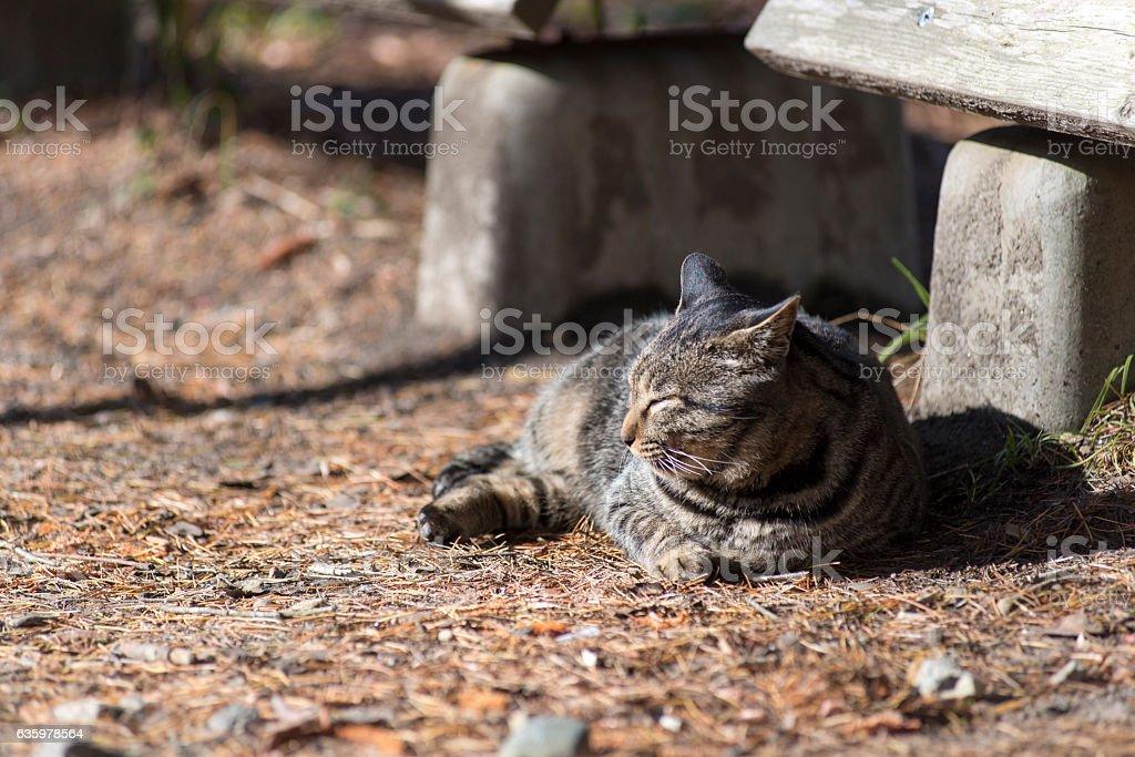 cat dozes on fallen leaf stock photo
