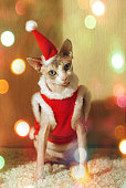 cat dressed as santa claus