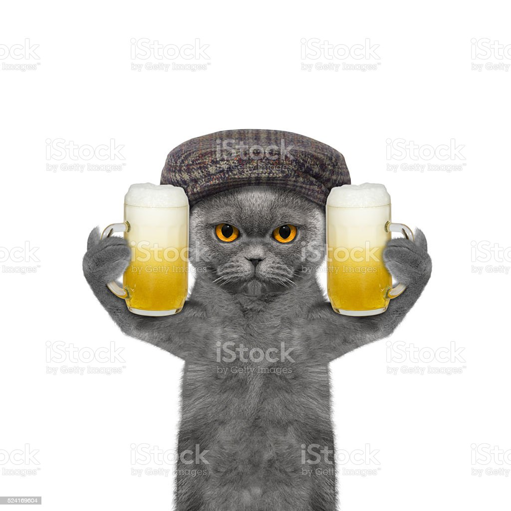 Cat drinks beer and greeting somebody stock photo