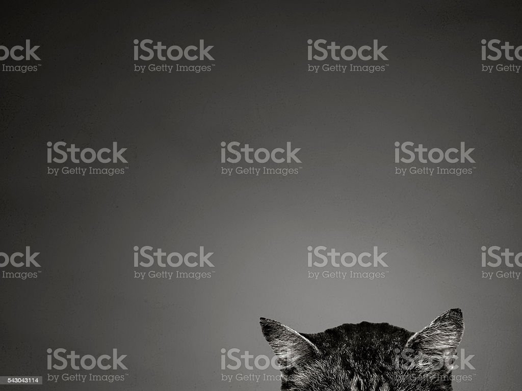cat ears on gray background concept stock photo