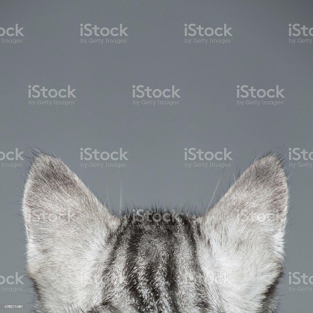 Cat Ears stock photo