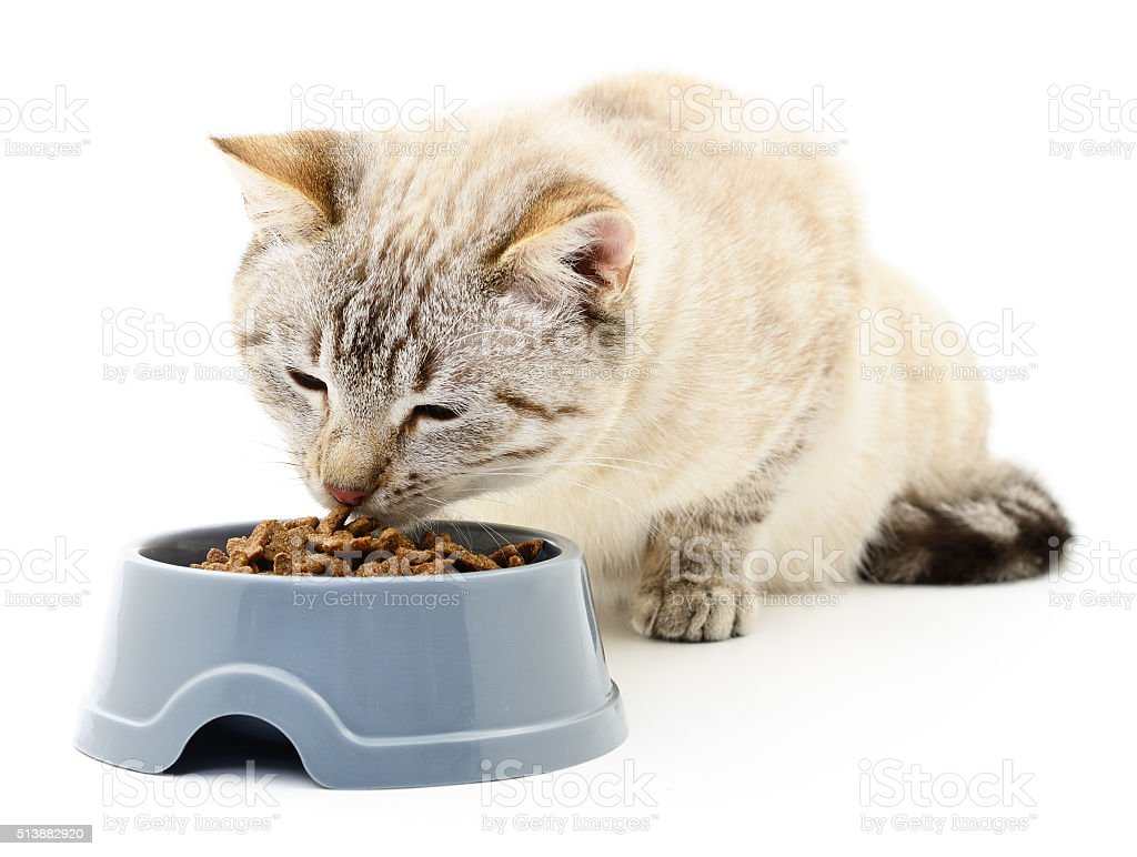 Cat eating dry food. stock photo