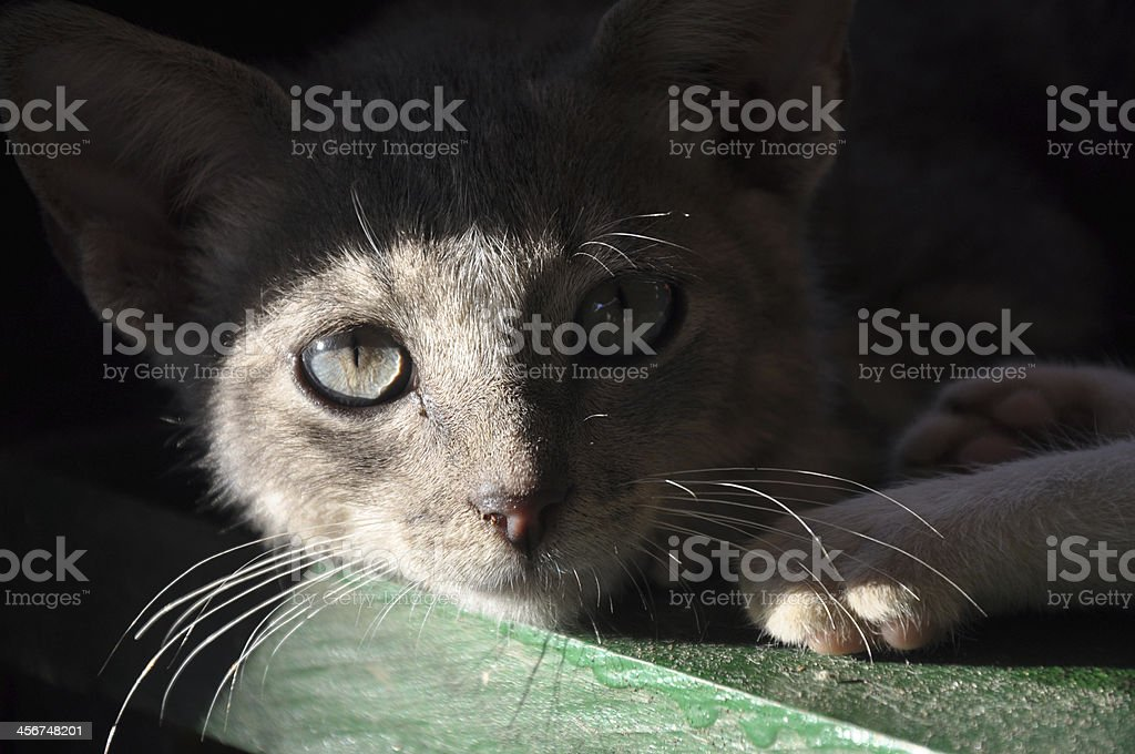 Cat eye stock photo