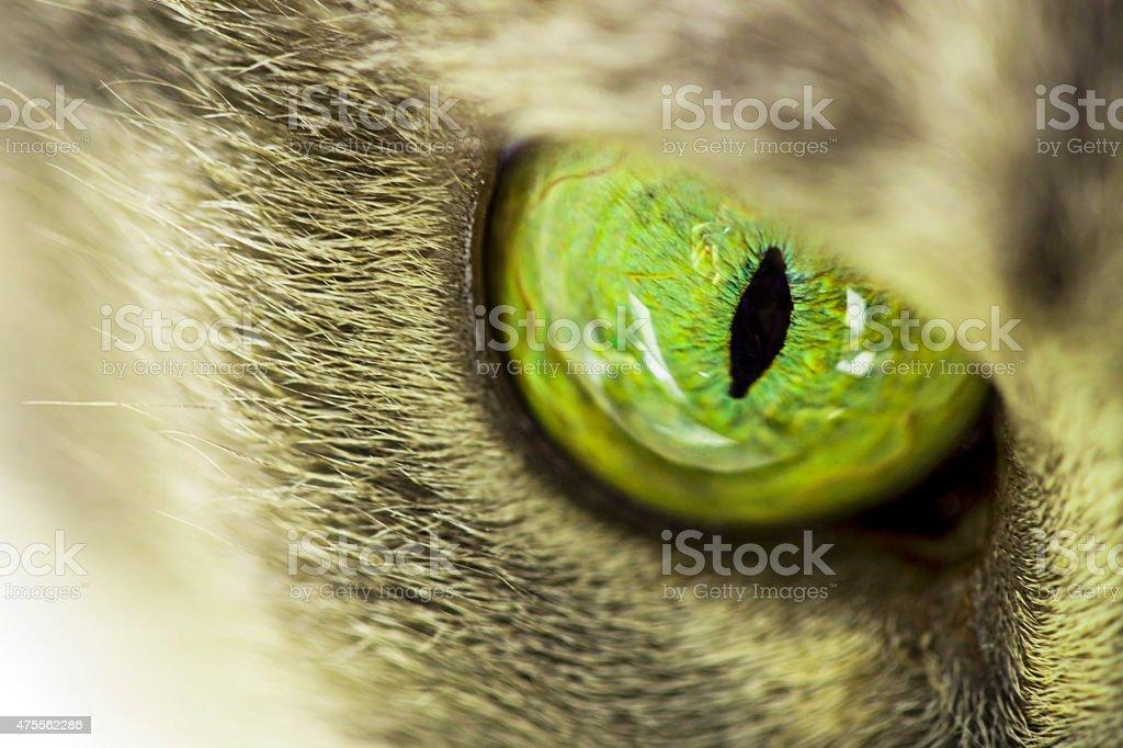 Cat eye stock photo
