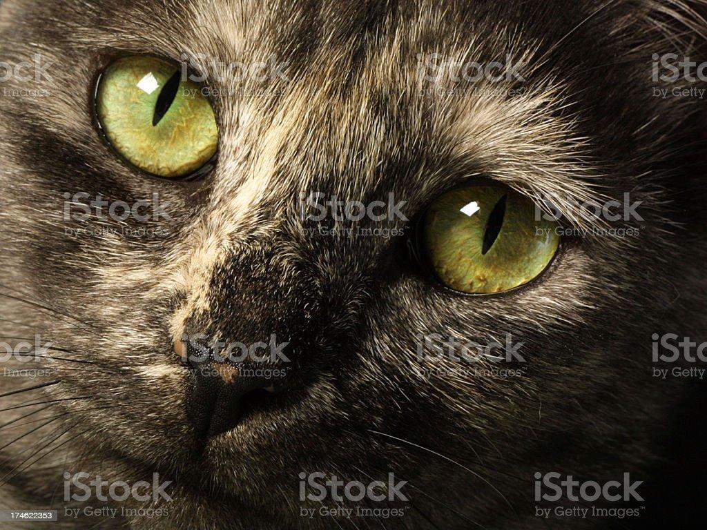 Cat Eyes royalty-free stock photo