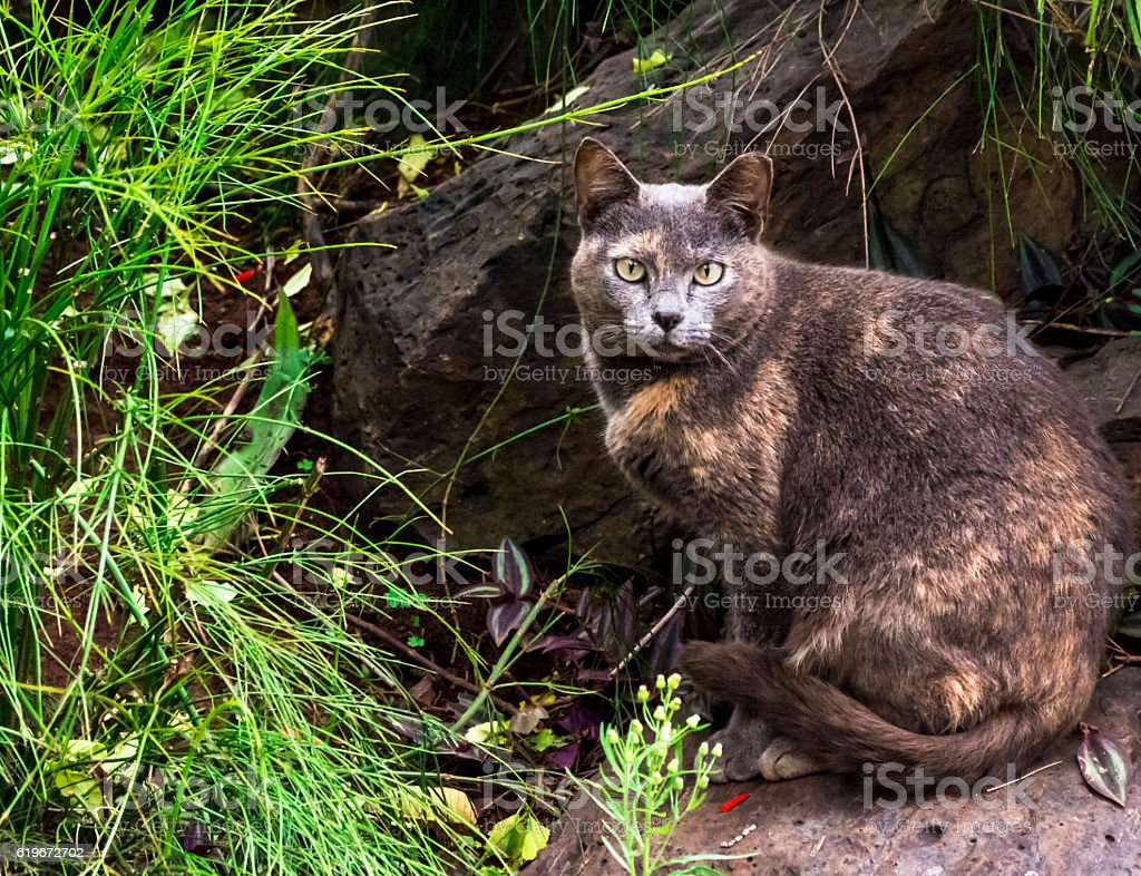 Cat Eyes royalty-free stock photo