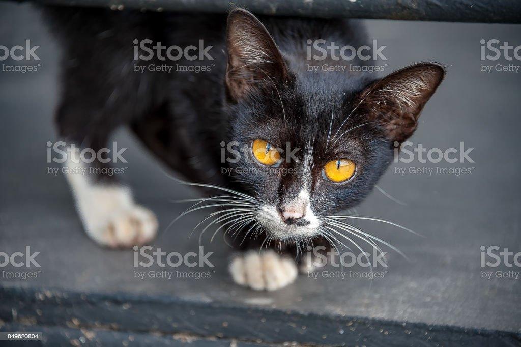 Cat eyes. Staring cat. stock photo