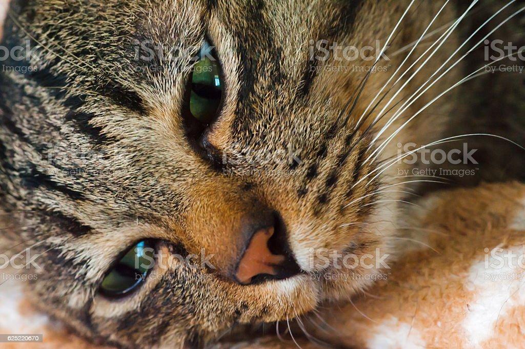 Cat face stock photo