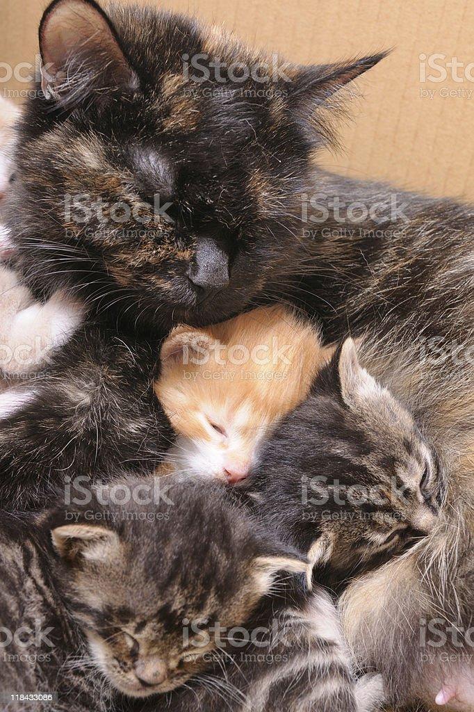 Cat family stock photo