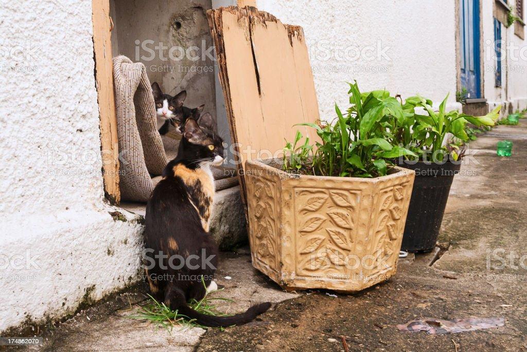 Cat family royalty-free stock photo