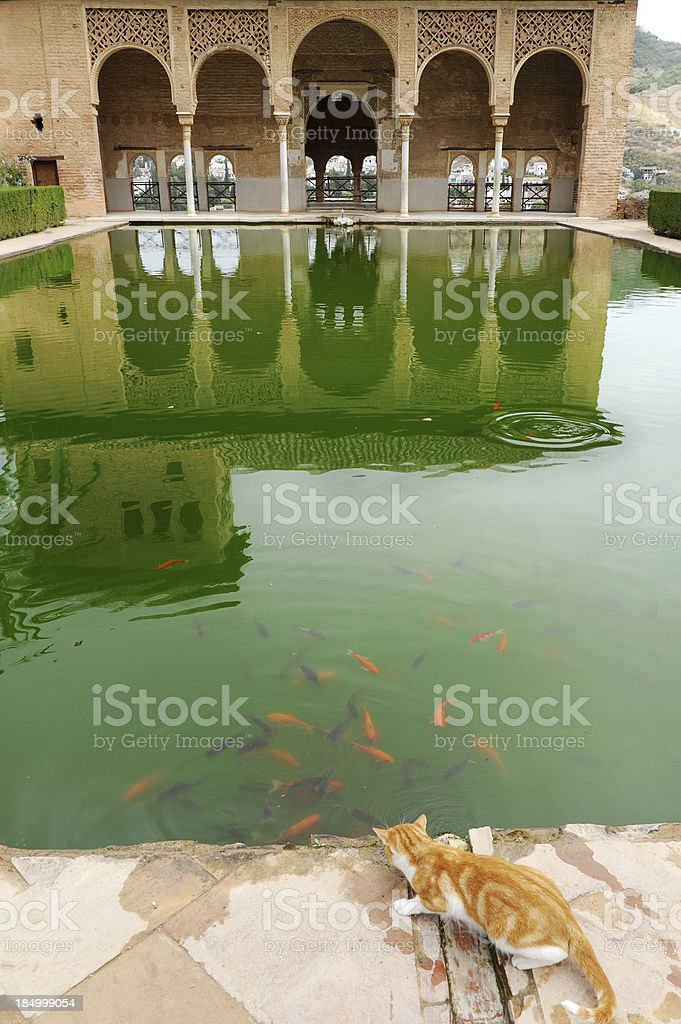 Cat fishing in a pond of the Alhambra, Granada, Spain stock photo