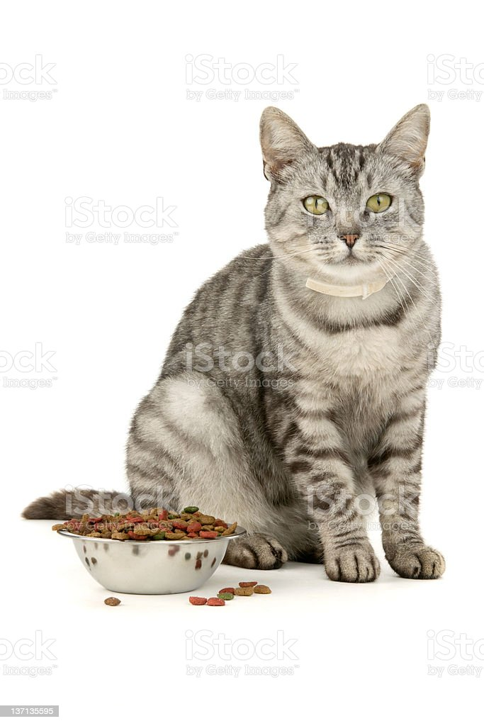 Cat food royalty-free stock photo